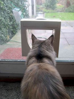 Cat Flap Fitter South London